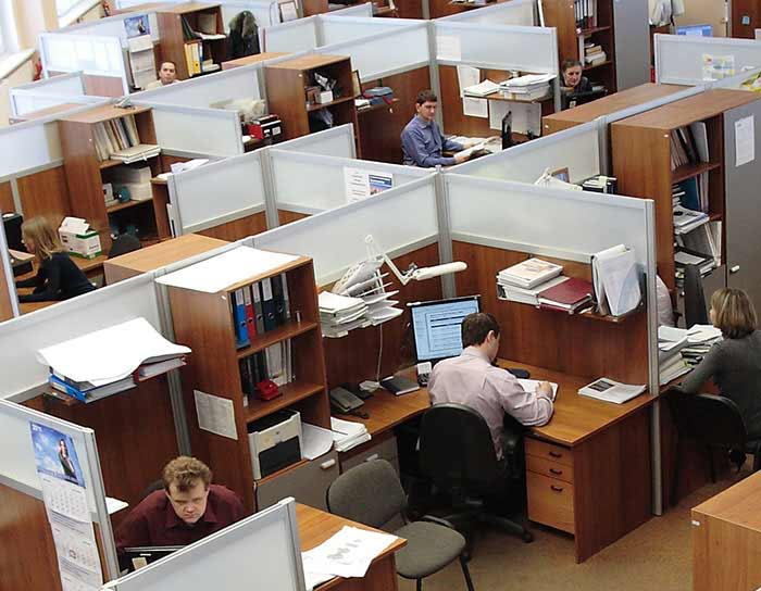 Office workers in cubicles.